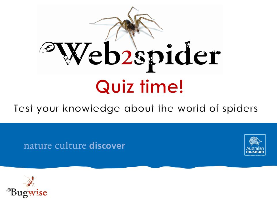 Quiz time! Test your knowledge about the world of spiders
