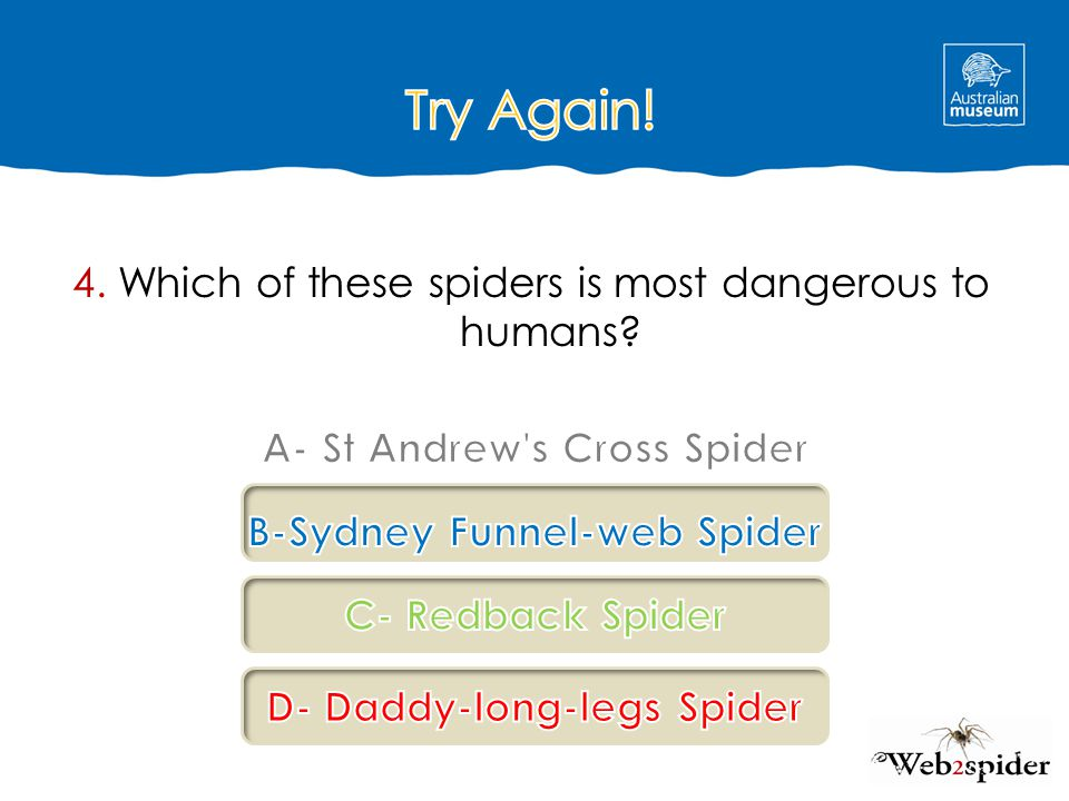 Try Again! 4. Which of these spiders is most dangerous to humans
