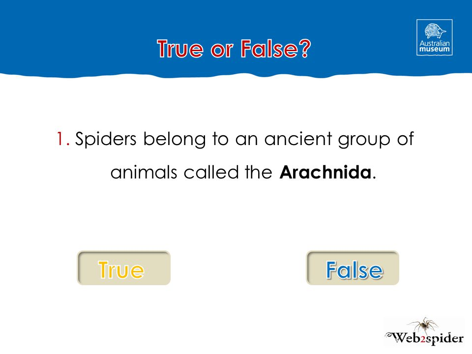 1. Spiders belong to an ancient group of animals called the Arachnida.