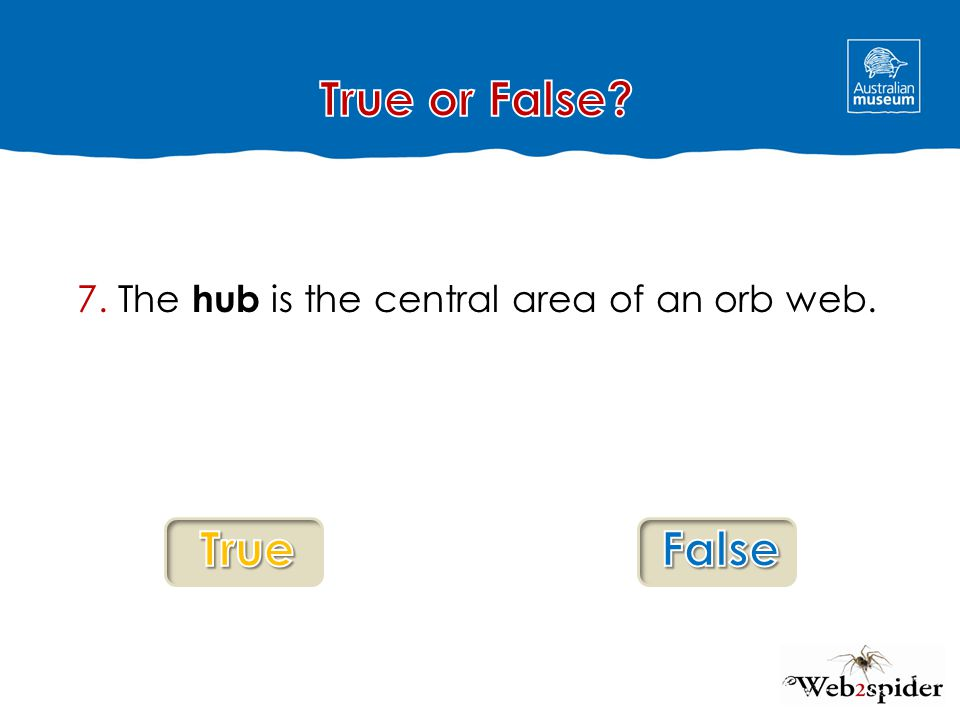 7. The hub is the central area of an orb web.