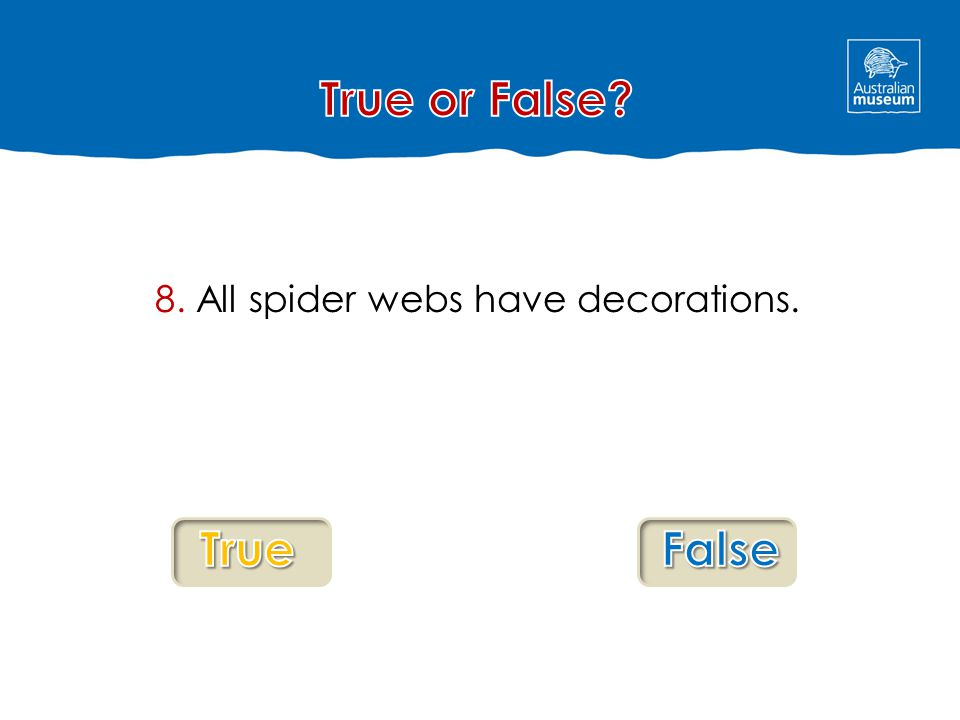 8. All spider webs have decorations.
