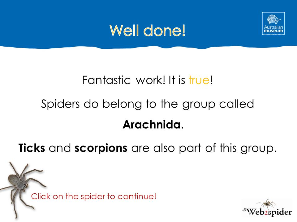 Well done! Fantastic work! It is true! Spiders do belong to the group called Arachnida. Ticks and scorpions are also part of this group.