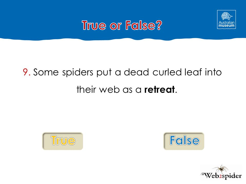 9. Some spiders put a dead curled leaf into their web as a retreat.