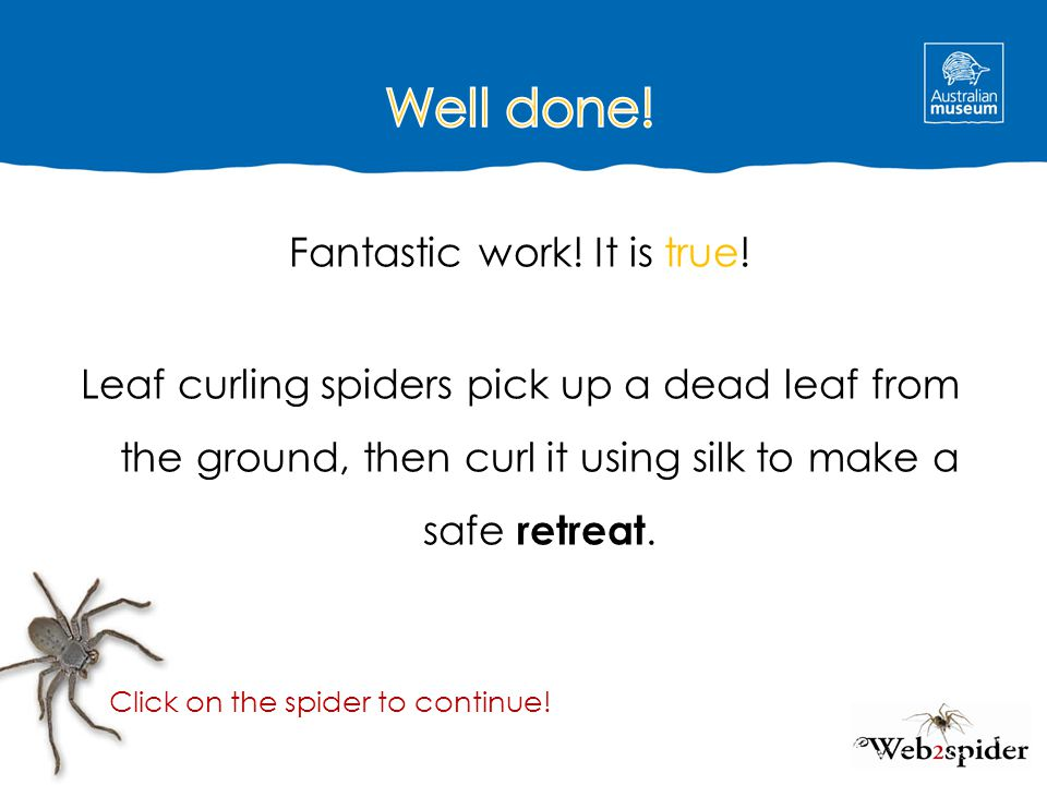 Well done! Fantastic work! It is true! Leaf curling spiders pick up a dead leaf from the ground, then curl it using silk to make a safe retreat.