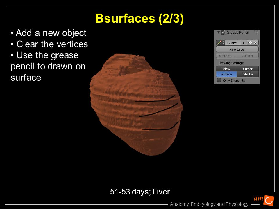 Bsurfaces (2/3) Add a new object Clear the vertices