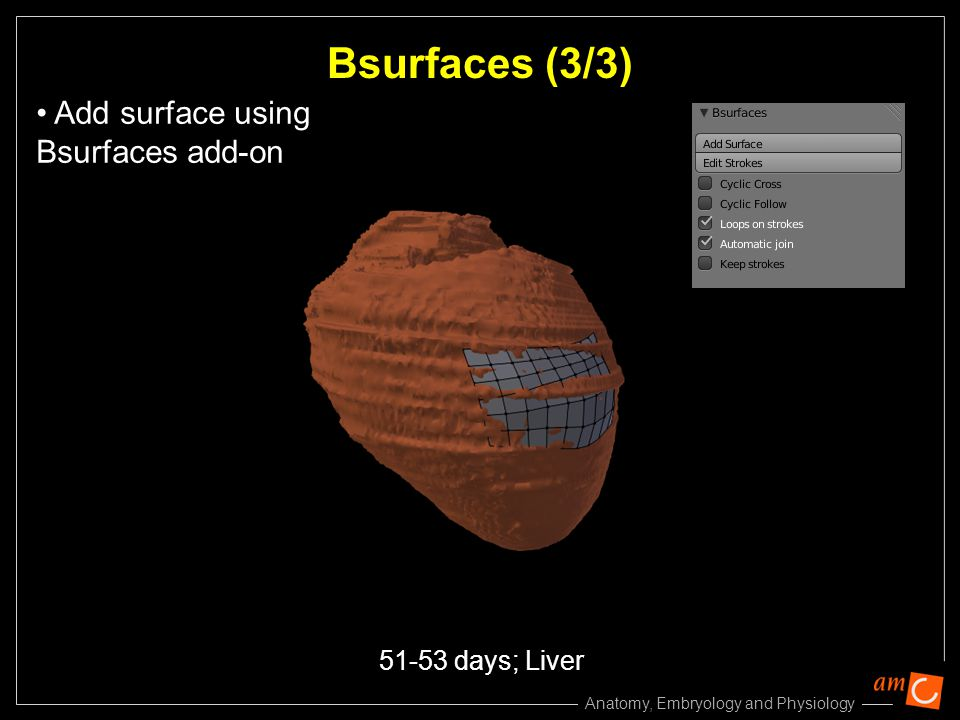 Bsurfaces (3/3) Add surface using Bsurfaces add-on 51-53 days; Liver