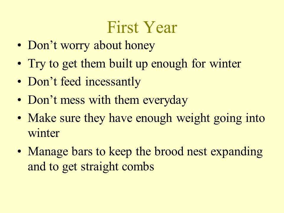 First Year Don't worry about honey