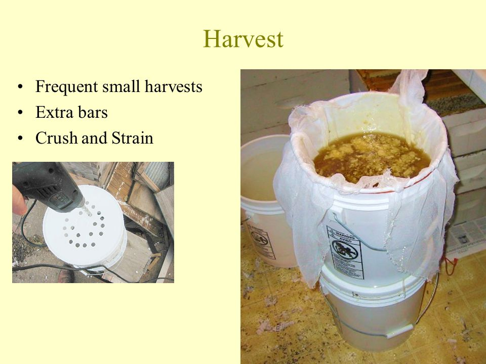 Harvest Frequent small harvests Extra bars Crush and Strain