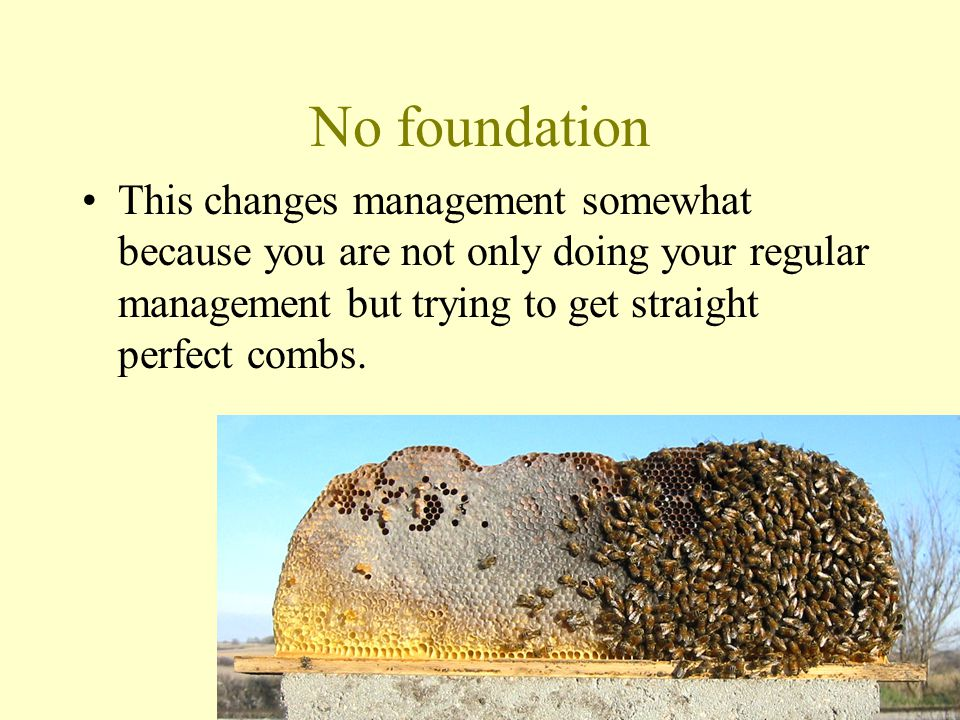 No foundation This changes management somewhat because you are not only doing your regular management but trying to get straight perfect combs.