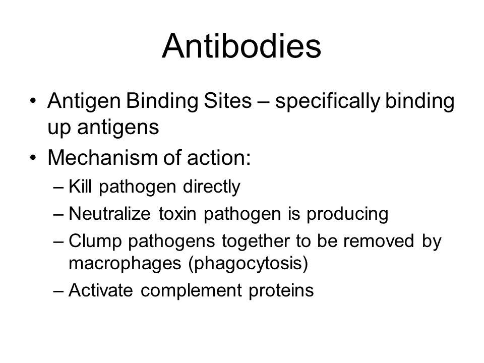Antibodies Antigen Binding Sites – specifically binding up antigens