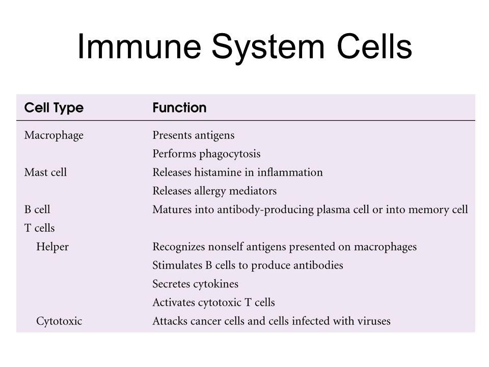 Immune System Cells