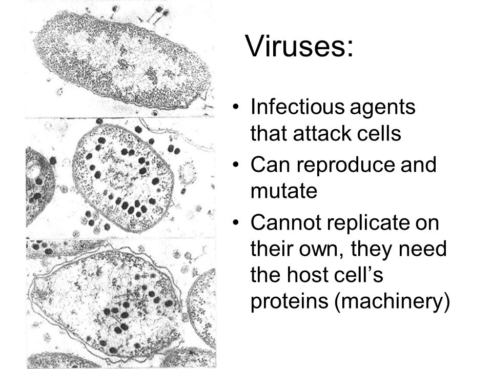 Viruses: Infectious agents that attack cells Can reproduce and mutate