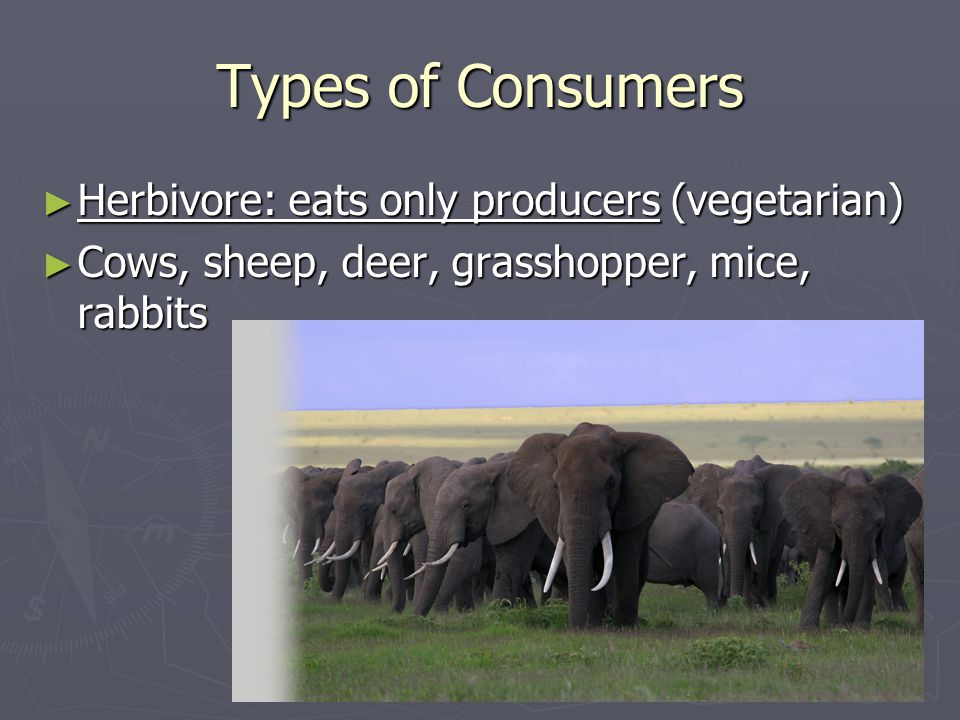 Types of Consumers Herbivore: eats only producers (vegetarian)