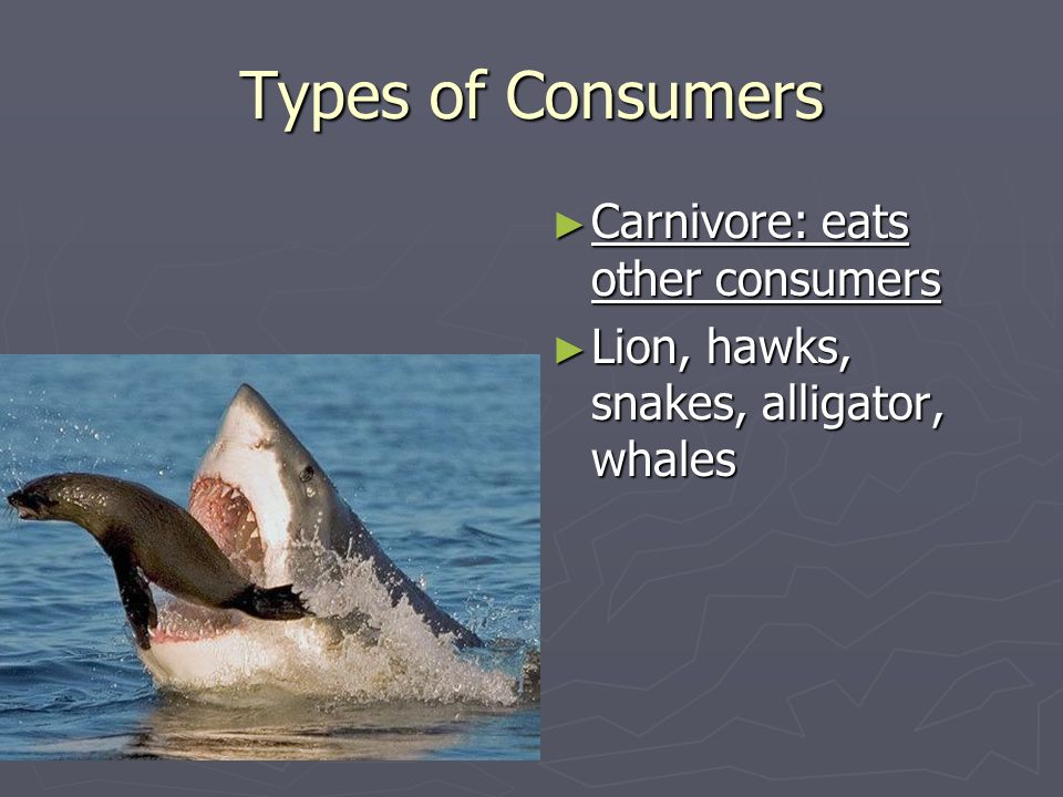 Types of Consumers Carnivore: eats other consumers