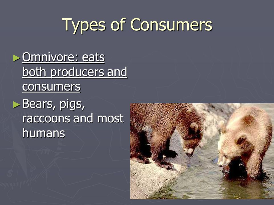 Types of Consumers Omnivore: eats both producers and consumers