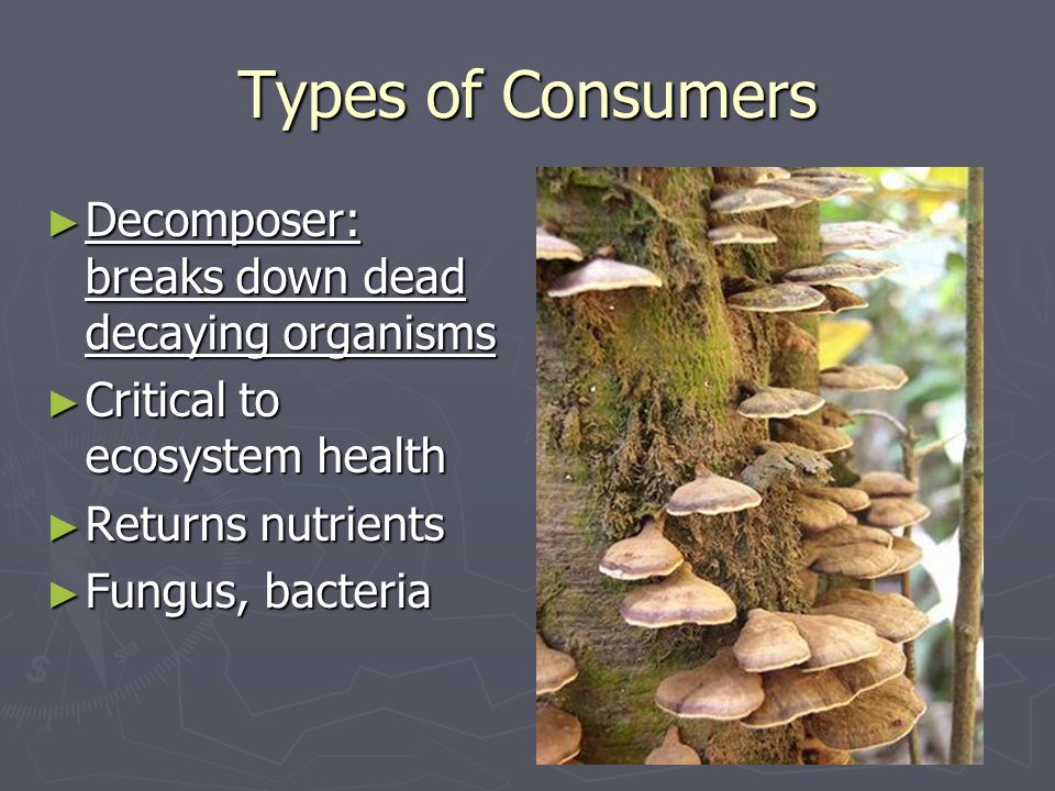 Types of Consumers Decomposer: breaks down dead decaying organisms