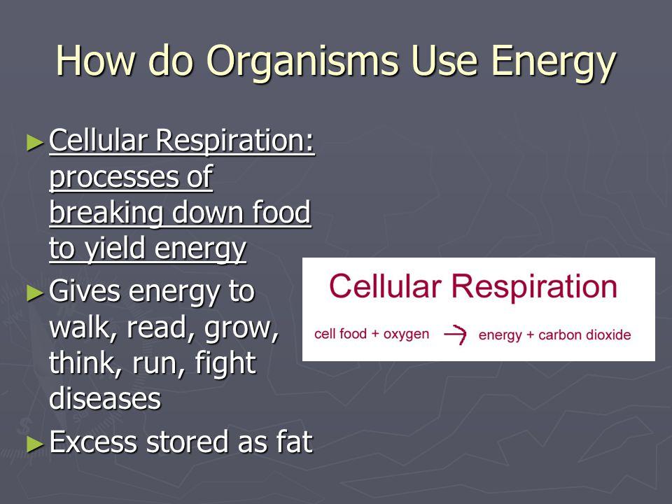 How do Organisms Use Energy