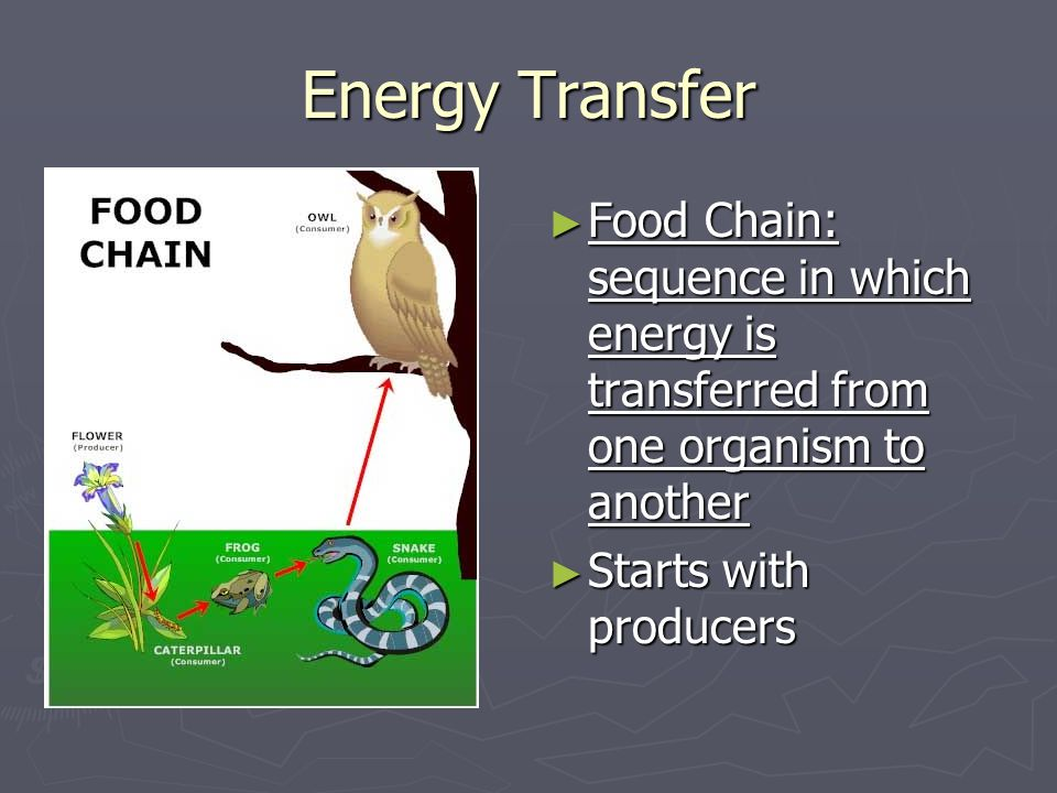 Energy Transfer Food Chain: sequence in which energy is transferred from one organism to another.