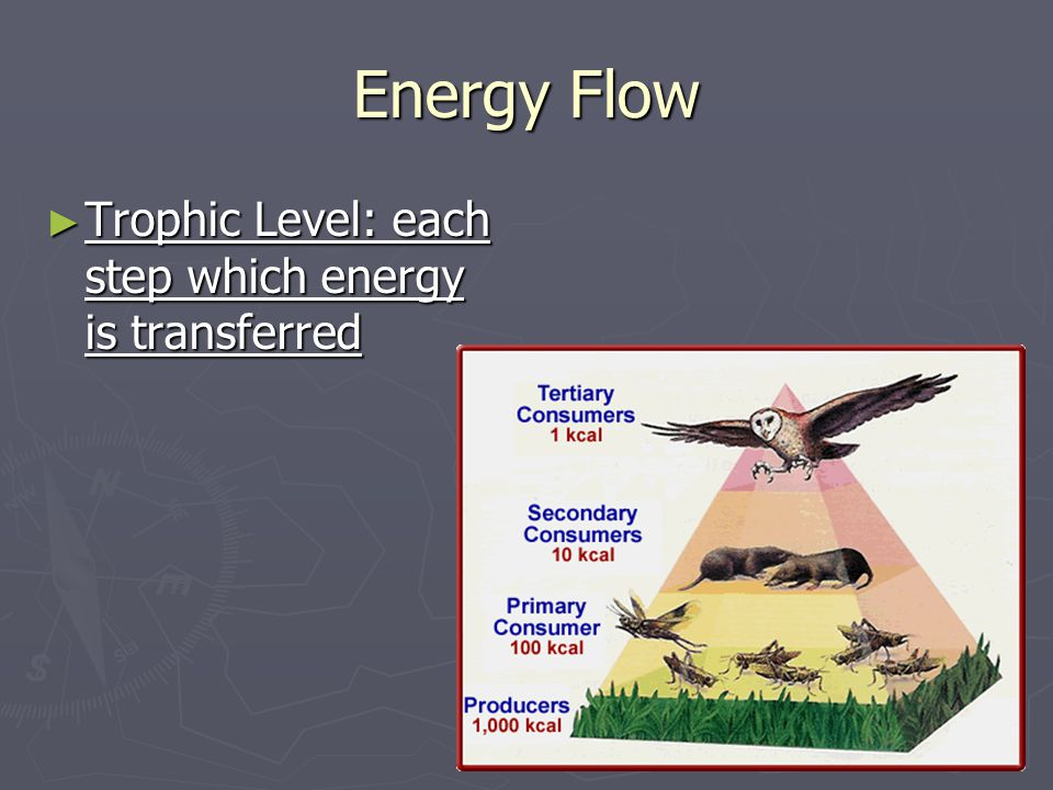 Energy Flow Trophic Level: each step which energy is transferred