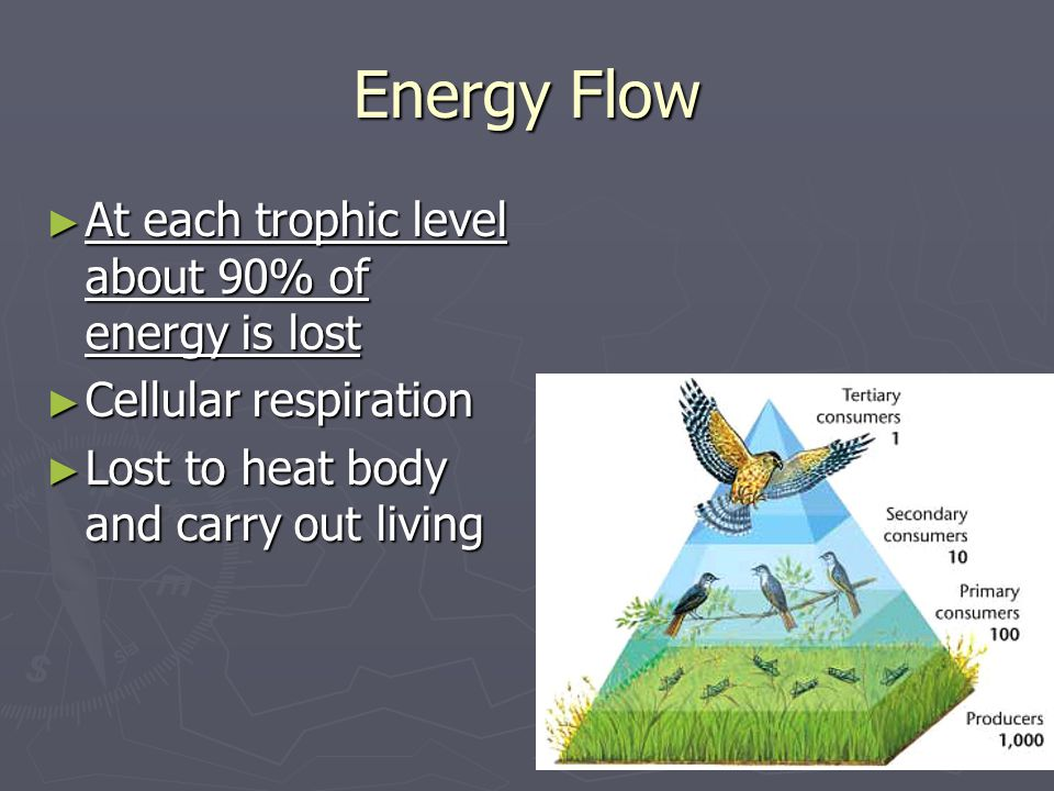Energy Flow At each trophic level about 90% of energy is lost
