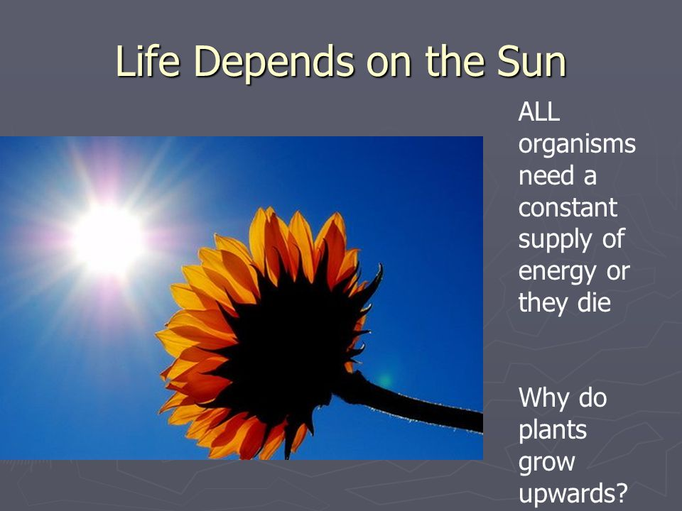 Life Depends on the Sun ALL organisms need a constant supply of energy or they die.