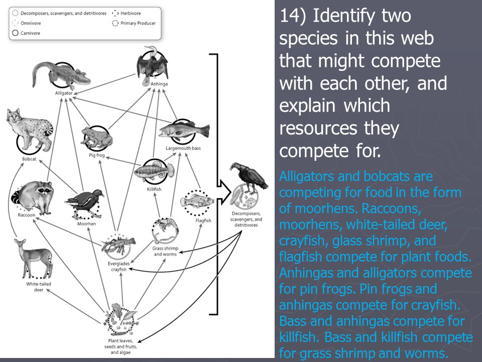 14) Identify two species in this web that might compete with each other, and explain which resources they compete for.