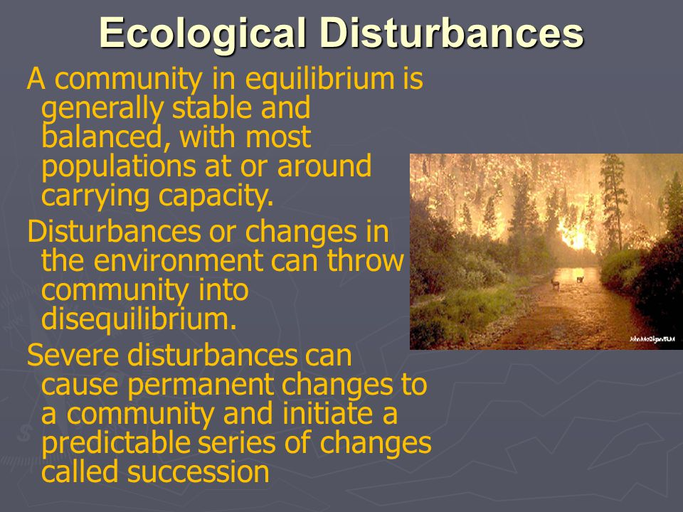 Ecological Disturbances