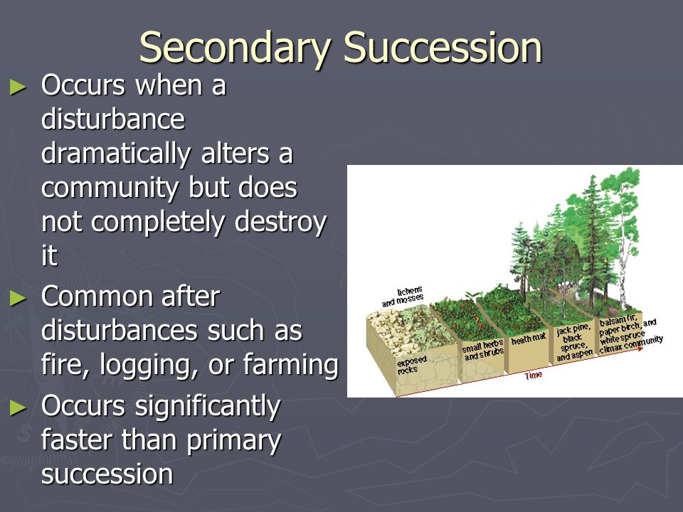 Secondary Succession Occurs when a disturbance dramatically alters a community but does not completely destroy it.