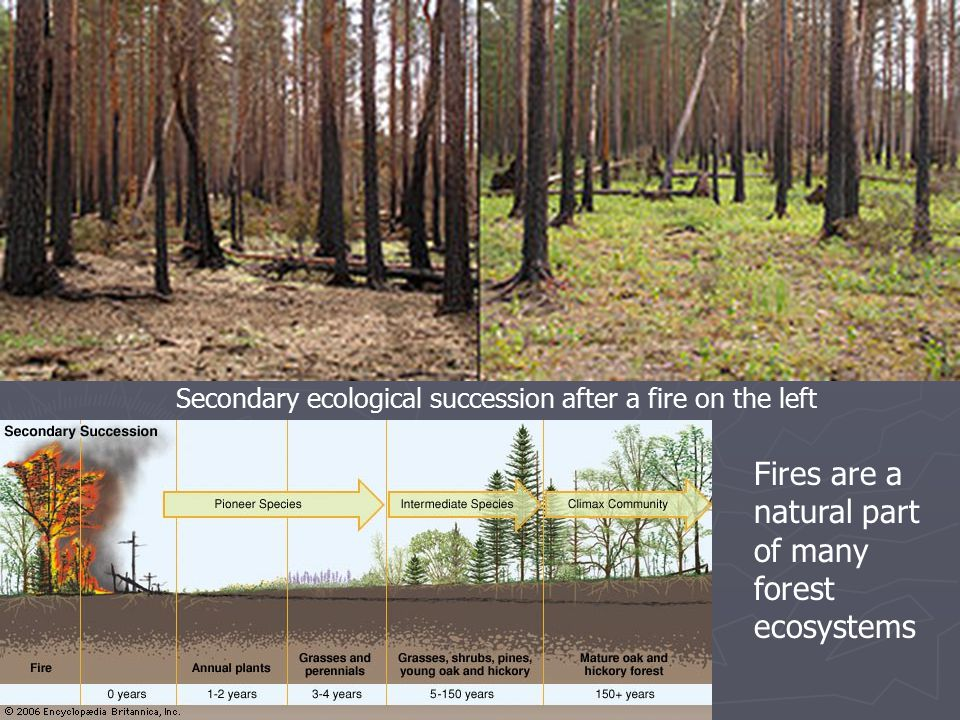 Secondary ecological succession after a fire on the left