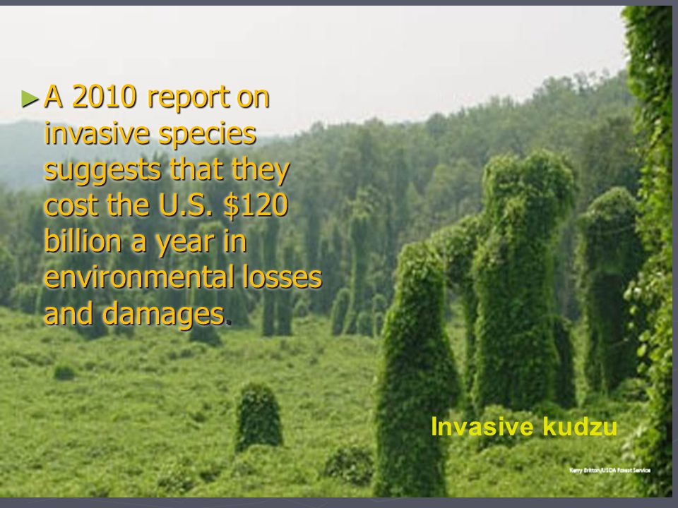 A 2010 report on invasive species suggests that they cost the U. S