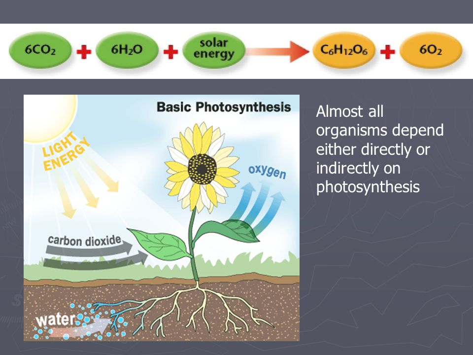 Almost all organisms depend either directly or indirectly on photosynthesis