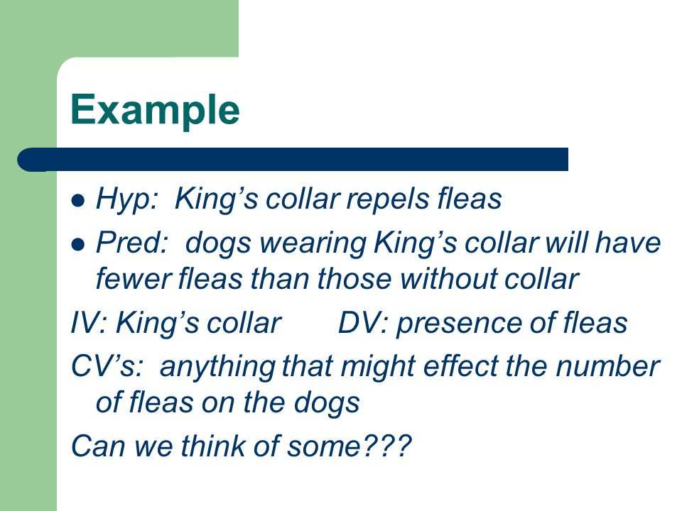 Example Hyp: King's collar repels fleas