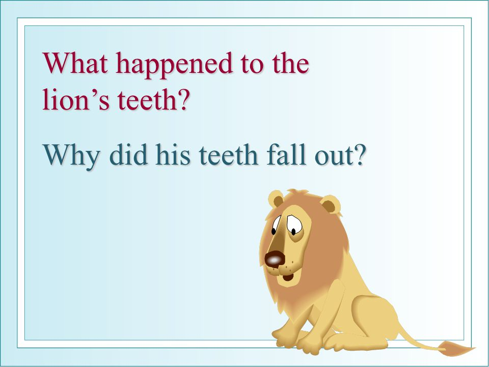 What happened to the lion's teeth