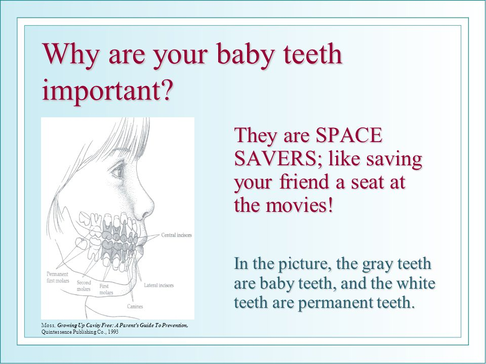 Oral Health And The Lemony Lion Ppt Video Online Download