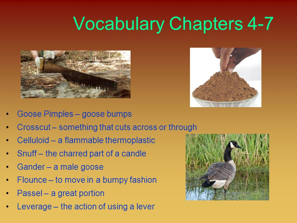 Vocabulary Chapters 4-7 Goose Pimples – goose bumps