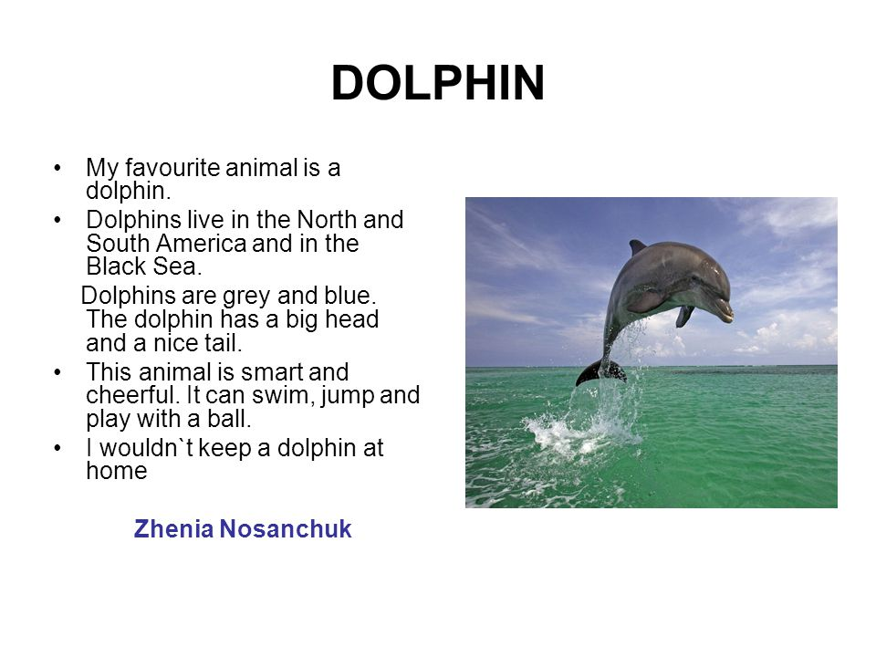 DOLPHIN My favourite animal is a dolphin.
