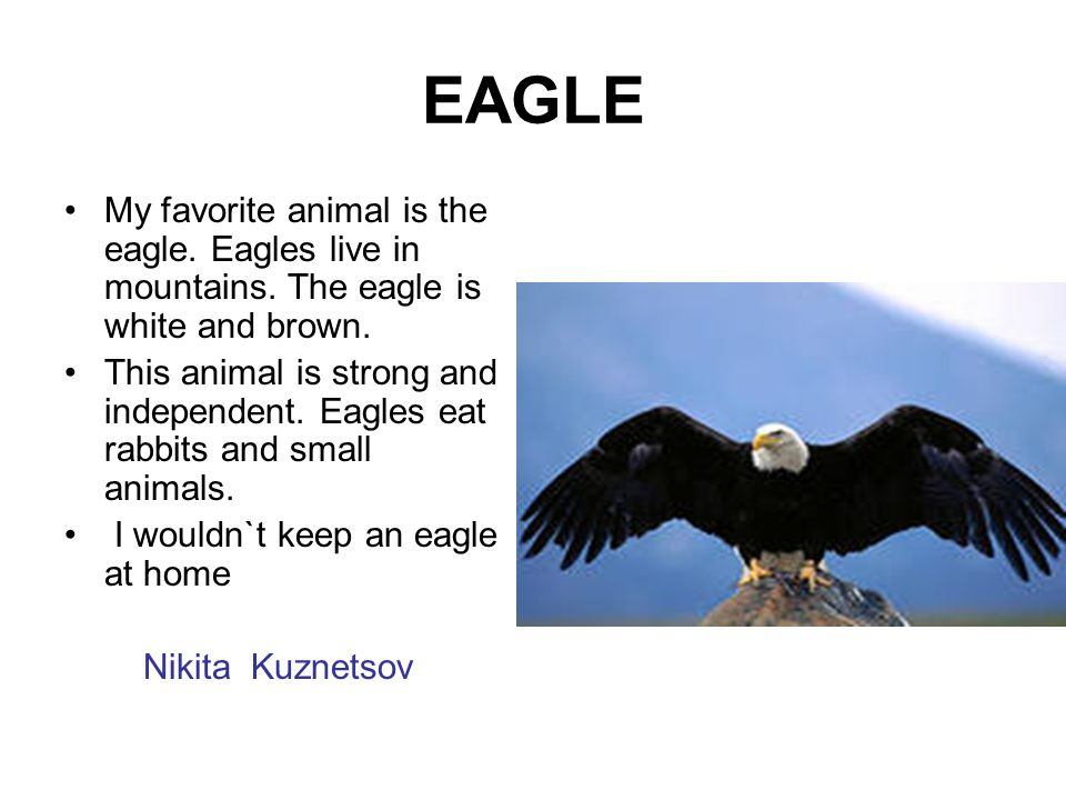 EAGLE My favorite animal is the eagle. Eagles live in mountains. The eagle is white and brown.
