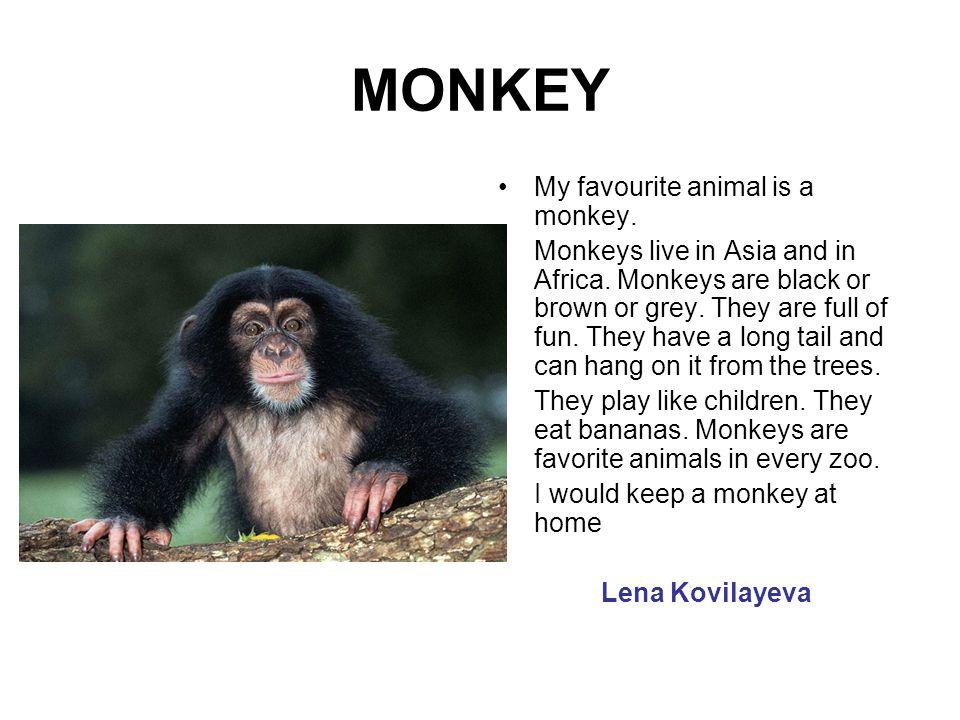 MONKEY My favourite animal is a monkey.