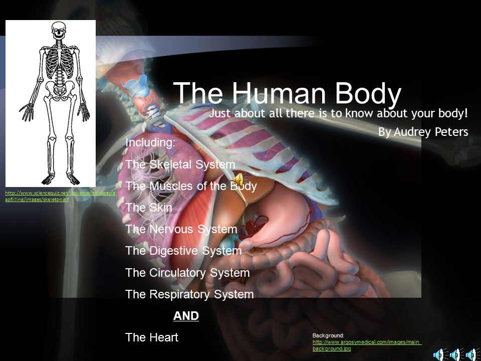 Just about all there is to know about your body! By Audrey Peters
