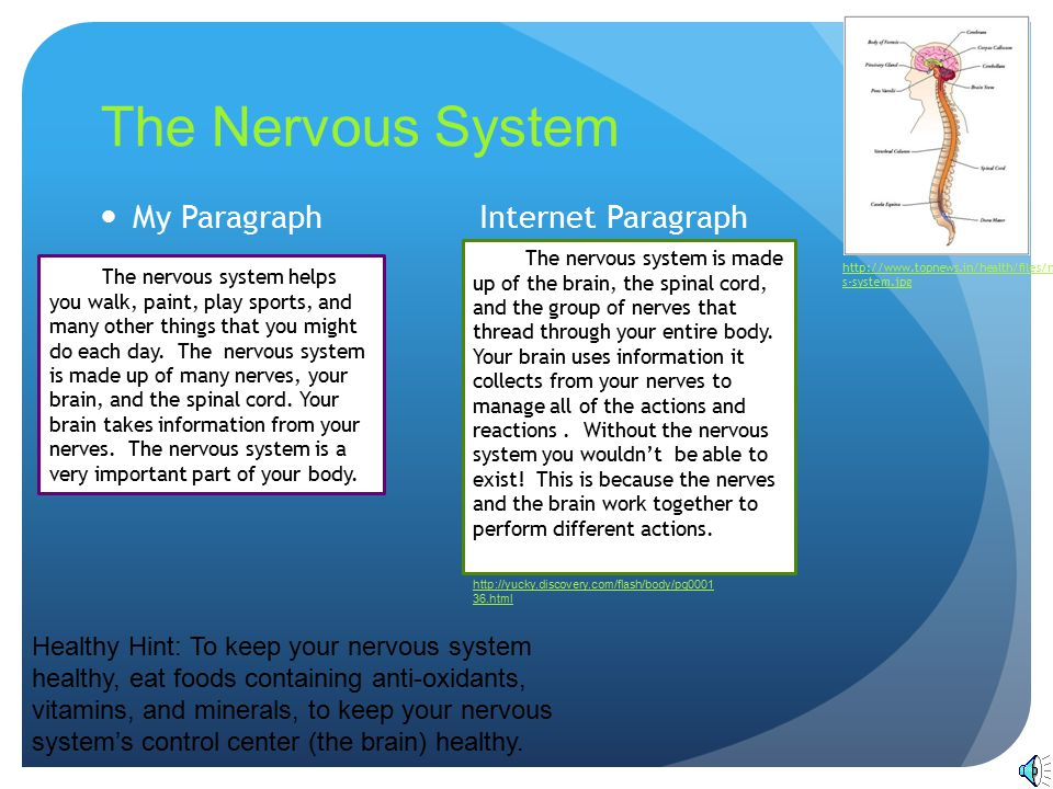 The Nervous System My Paragraph Internet Paragraph