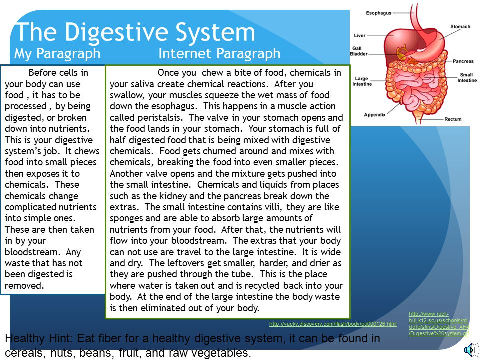 The Digestive System My Paragraph Internet Paragraph