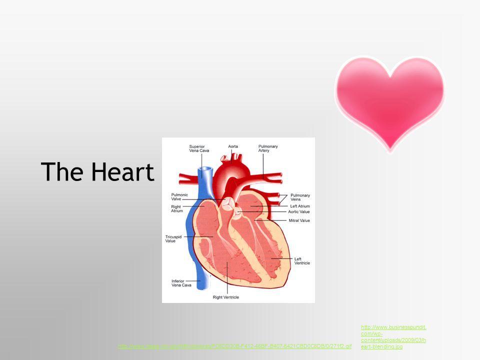 The Heart http://www.businesspundit.com/wp-content/uploads/2009/03/heart-blending.jpg.
