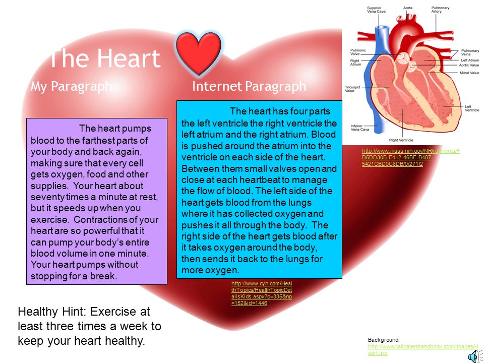 The Heart My Paragraph Internet Paragraph