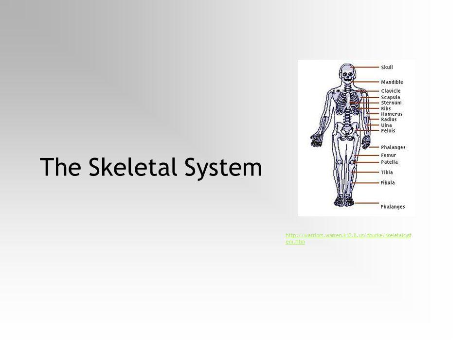 The Skeletal System http://warriors.warren.k12.il.us/dburke/skeletalsystem.htm