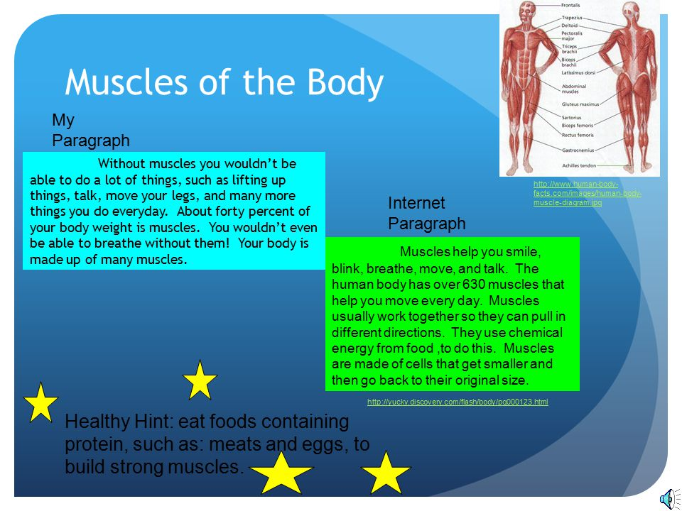 Muscles of the Body My Paragraph.