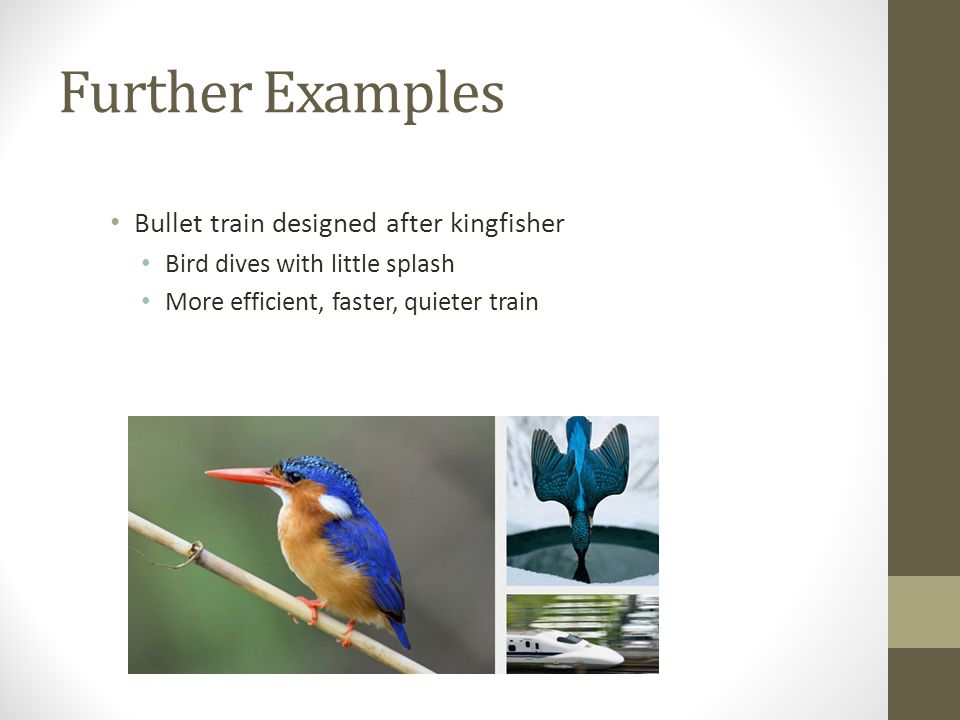 Further Examples Bullet train designed after kingfisher