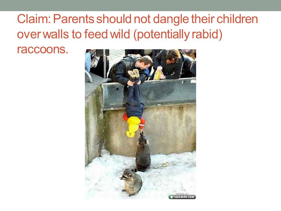 Claim: Parents should not dangle their children over walls to feed wild (potentially rabid) raccoons.