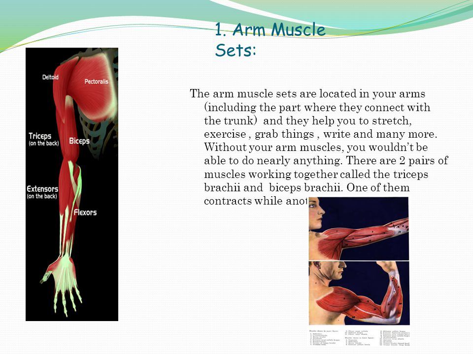 1. Arm Muscle Sets: