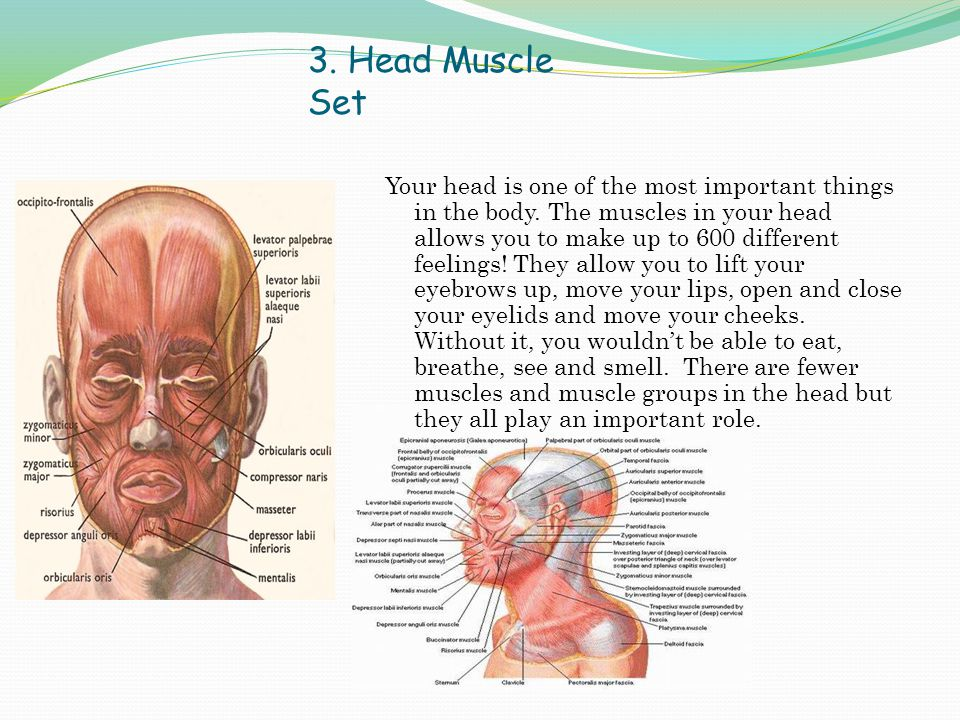 3. Head Muscle Set