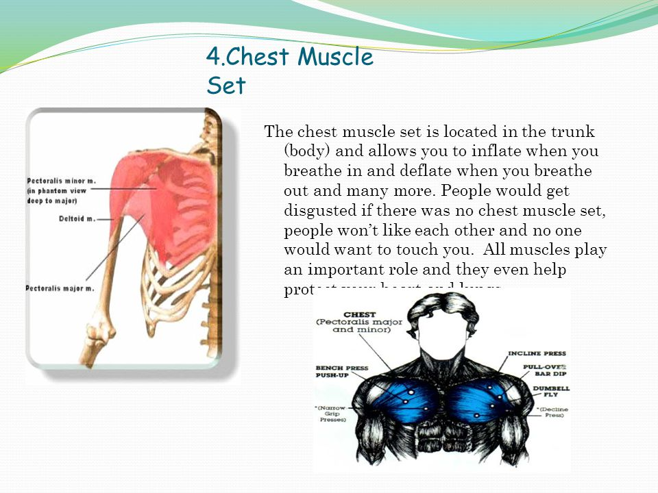 4.Chest Muscle Set